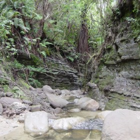 Tarakihinui Stream before forest harvest.