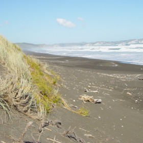 Pingao and spinifex dune protection along the Nuhaka Beach.